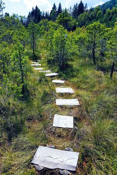 Mohos Peat Bog is a wonder of volcanic activity in which water, wildlife, and some wood steps aret the recipe for an amazing experience. Stories For Kids, Great Stories, Wooden Path, Water Experiments, Visit Romania, Walk On Water, Carnivorous Plants, Pine Forest, Small Plants