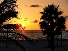 Clearwater Beach Florida Palm Trees, Palm Tree Sunset, Beaches Near Orlando, Clearwater Beach Florida, Amazing Pics, Awesome, Stars At Night, Beach Scenes, Beach Pictures