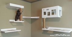 Off The Wall Pet's Posh Cat collection, a modern take on their modular wall climbing system that lets you build a completely customized cat superhighway.
