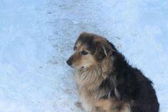 A o to nasz najstarszy pies czyli Pani Malinowska :)
