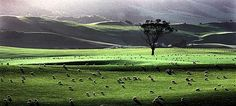 Image result for Southland NZ landscape