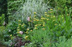 Brandkraut *Garten-Liebe* Plants, Hostas