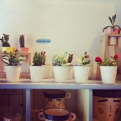 Cactus en Grey Street