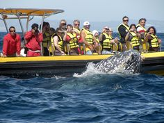 Get up close and personal with whales in Cabo, Mexico.