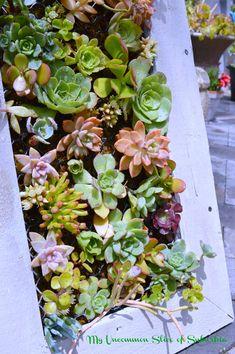 Garden Archives - My Uncommon Slice of Suburbia