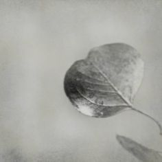 Black and White Gray / Silver Leaf Nature Fine by andreahurleyart
