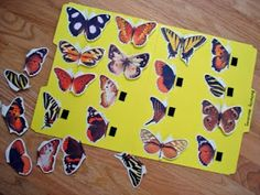 """Butterfly Matching Game (check to see if this is a free printable) love the """"real life photography""""!"""