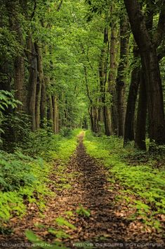 path by Frans Deeders / All Nature, Amazing Nature, Landscape Photography, Nature Photography, Forest Bathing, Forest Path, Walk In The Woods, Landscape Pictures, Pathways