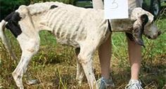 abused animals