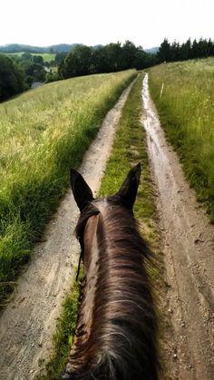 As Seen Through Horses Ears - Mühlviertel - ❤️Ausritt❤️ - Cute Horses, Horse Love, Beautiful Horses, Horse Photos, Horse Pictures, Horse Wallpaper, Horse Ears, Horse Photography, Night Photography