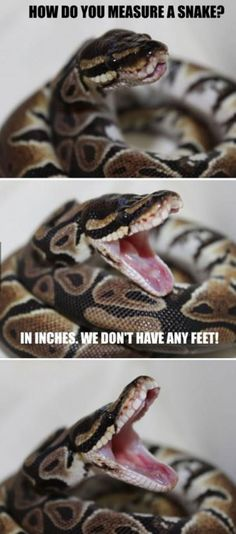 This Snake Should Do Stand Up