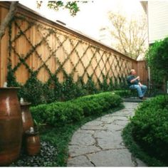 Jasmine vines trellis - I still want to do this on our wall... maybe larger? #gardenvinesbackyards #gardenvinestrellis