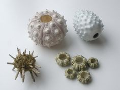 Collection of sea urchins | Flickr - Photo Sharing!