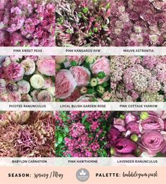 Mayesh Cooler Picks - Spring -  Bubblegum // top: Pink sweet peas, pink kangaroo paw, mauve astrantia | middle: Picotee ranunculus, local blush garden rose, pink cottage yarrow | bottom: Babylon carnation, Pink Hawthorne, lavender ranunculus