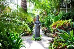 Luxurious tropical gardens - Google Search