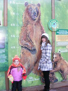 Brookfield Zoo Bear Exhibit