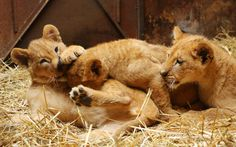Animal photos of the week - Telegraph