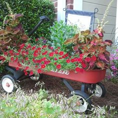 """For years we gave our kids joy rides in this little red wagon. Now years later, """"Joy"""" rides again!"""