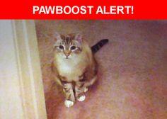 Please spread the word! Pinky was last seen in Rohnert Park, CA 94928.    Nearest Address: GRATON CASINO  (* jumped out car door near parking garage.)to