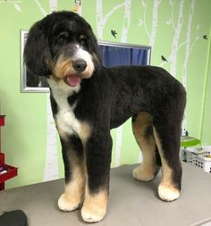 22 best large breed hairstyles images on pinterest dog grooming make one special photo charms for your pets compatible with your pandora bracelets solutioingenieria Image collections