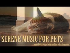 Relax your dog, cat or any other pet with calming music! (Relax My Pet - featured in Modern Dog) - YouTube