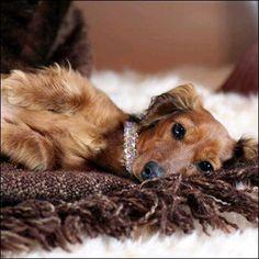 Pet Jewelry- Dog Necklace