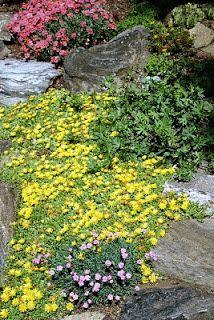 nice rock garden plant list
