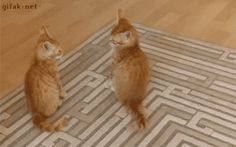 Смешные и забавные котики поднимут настроение!