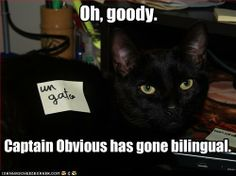 I like the lol cats, but this one is by far my fave!