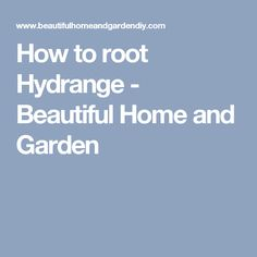 How to root Hydrange - Beautiful Home and Garden