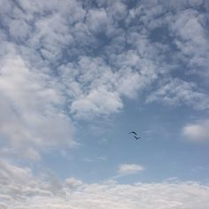 """May 4, 2015 {124/365} """"For once you have tasted flight you will walk the earth with your eyes turned skywards, for there you have been and there you will long to return."""" ~ Leonardo da Vinci (C'est ma vie!: Flight)"""
