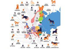 Las razas de perro más populares a partir de las búsquedas en Google y las vistas en TikTok (y los ingresos millonarios que algunos generan) | SrPerro, la guía para animales urbanos. Map, Mongrel, Newfoundland, Dog Breeds, Kawaii Things, Google Search, Urban, Location Map, Maps