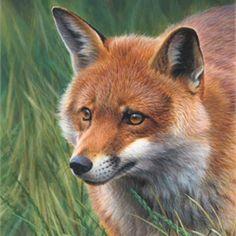 Andrew Hutchinson Illustration Portfolio - Wildlife and ...