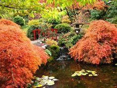 japanischer garten gestalten farbige pflanzenbeete rote brücke