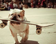 Skateboarding Bulldogs