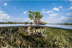 Greg Leceur: Krokodil