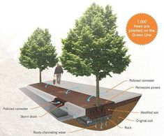 Green Line Tree Trenches