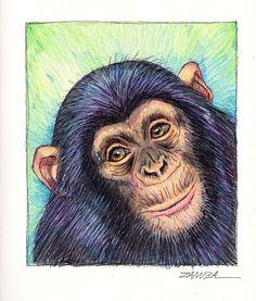 """Zamba - Ano do Macaco """" 2016""""."""