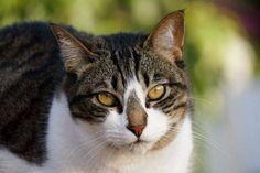 Helfende Hände e.V. - Katze Nose (EKH ca. 5 Jahre) sucht ein Zuhause…