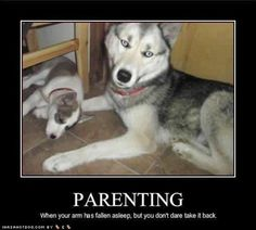 196 Best Dog Photos With Captions Images Funny Animal Pictures