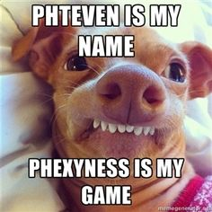 Phteven is my name Phexyness is my game | Phteven Dog