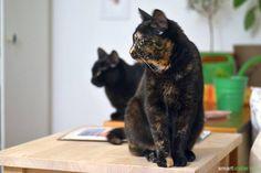 Was ist in dem Futter deiner Katze? Wir hinterfragen was eine Katze zur Ernährung benötigt und welche Wege es gibt, Katzenfutter selber herzustellen.