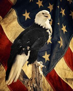 American Eagle - Eagle with flag photography - canvas - Bald Eagle photography - Patriotic photography - Flag photography - Patriotic art American Flag Wallpaper, American Flag Eagle, American Freedom, American Art, Eagle Images, Eagle Pictures, Patriotic Pictures, Eagle Art, I Love America