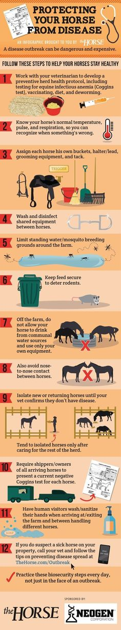 Infographic: Protecting Your Horse From Disease