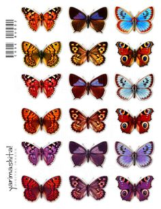 Vintage butterfly images  Digital collage sheet images  Colorful recolored  Scrapbooking and Decoupage Supplies  Old book scan  Download printable