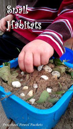 Make a snail habitat!! AND fun facts about snails AND snail anatomy!! #preschoolactivities #preschoolsciences