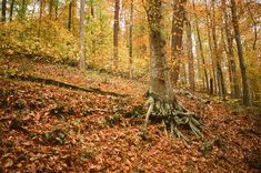 10 best places in KY to hike in the Fall.