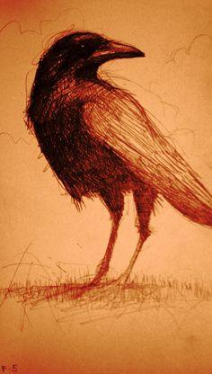 *SethFitts ~ Crow in rust tones, 2005 (pencil on paper) #AnimalArt #Art