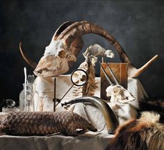 The Beaty Biodiversity Museum featured in MONTECRISTO Magazine. Animal Skeletons, Animal Skulls, Skeleton Bones, Skull And Bones, Crane, Historia Natural, Animal Bones, Architectural Antiques, Vanitas