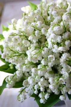 Lily of the valley. Reminds me of my sweet beagle girls who used to lay in my lily of the valley.